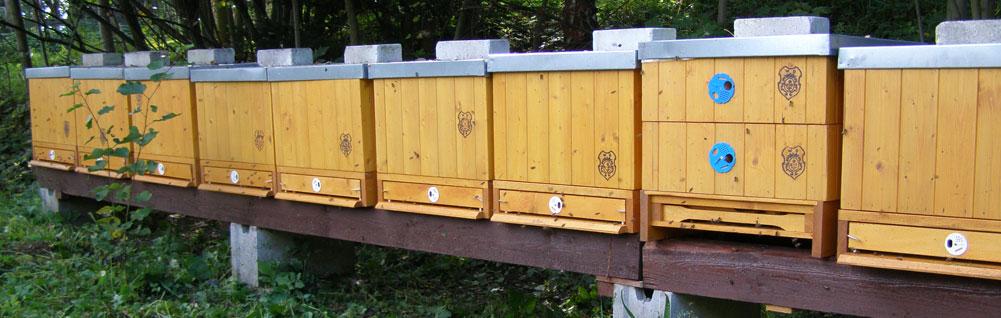 včelařství dvořák semtínek